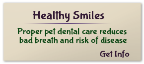 Healthy Smiles - Get Info