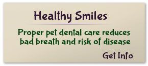 Proper pet dental care reduces bad breath and risk of disease